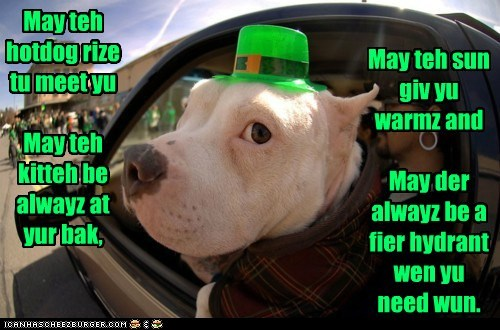 I Has A Hotdog: An Irish Goggie Blessing