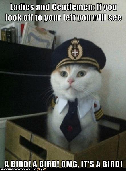 Animal Memes: Captain Kitteh - Slight Detour, Ladies and Gentlemen