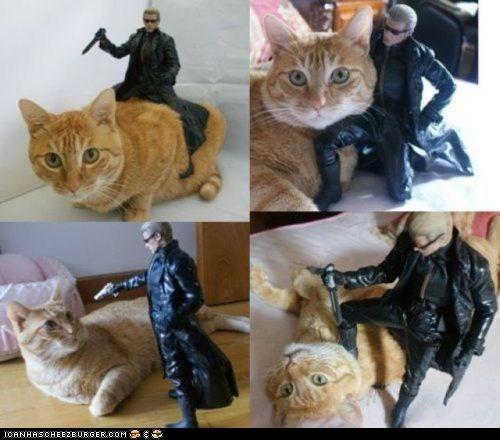 action figure,albert wesker,best of the week,cat,Hall of Fame,posing,prequel,resident evil,tabby,wesker