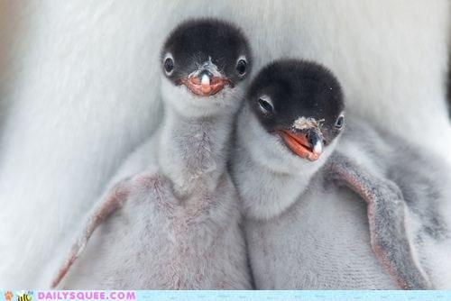chicks,penguins,Photo,smile