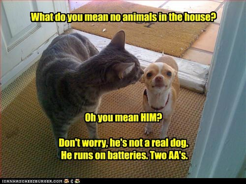 What do you mean no animals in the house?