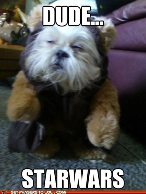 dogs,dude,ewok,high,star wars,stoned