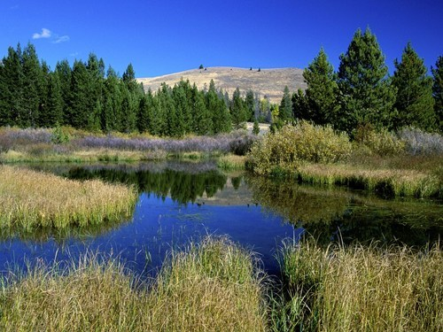 Beaver Ponds in Sun Valley Idaho