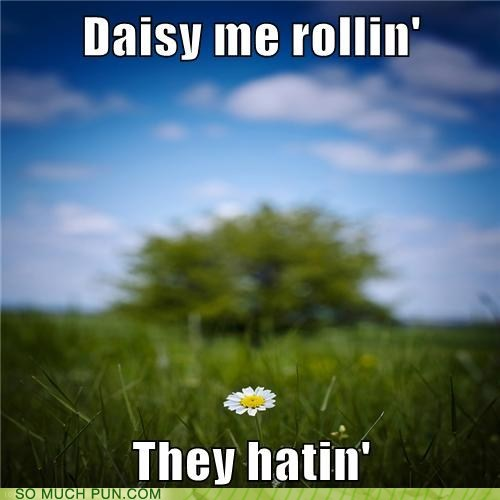 They're Only Hatin' Because You're Kind of a Daffodilweed