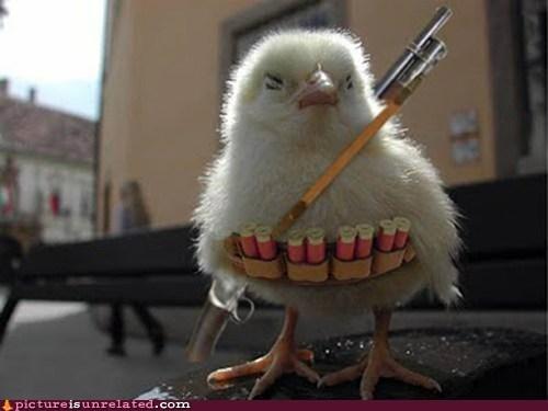 chick,guerilla,gun,shopped pixels,wtf
