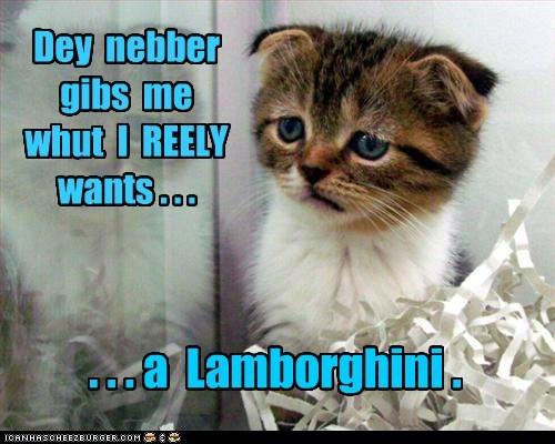 Enuf wif da catnip mowsies!