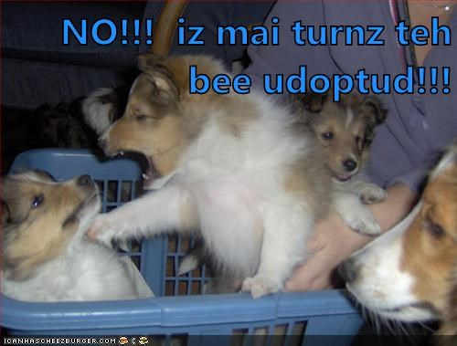 Cyoot Puppy ob teh day: Mine Turn 4 Udopshun!