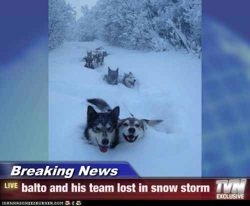 Breaking News - balto and his team lost in snow storm