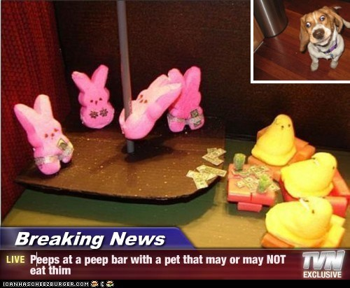 Breaking News - Peeps at a peep bar with a pet that may or may NOT eat thim