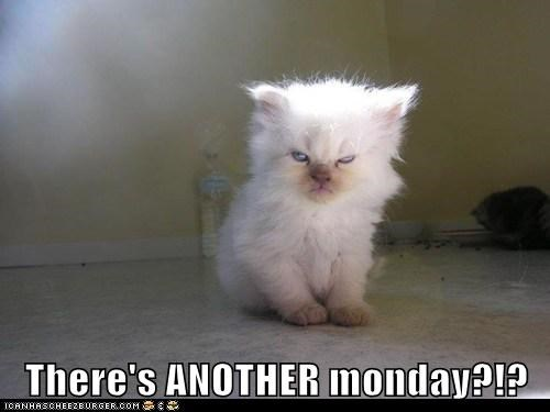 There's ANOTHER monday?!?