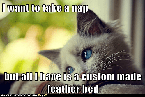 Cats,custom made,feather bed,first world cat problems,First World Problems,Memes,nap,sleep,whining