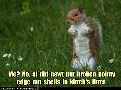 Me?  No,  ai  did  nawt  put  broken  pointy  edge  nut  shells  in  kitteh's  litter.
