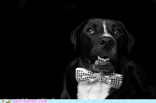 Reader Squees: Black Tie Doggie