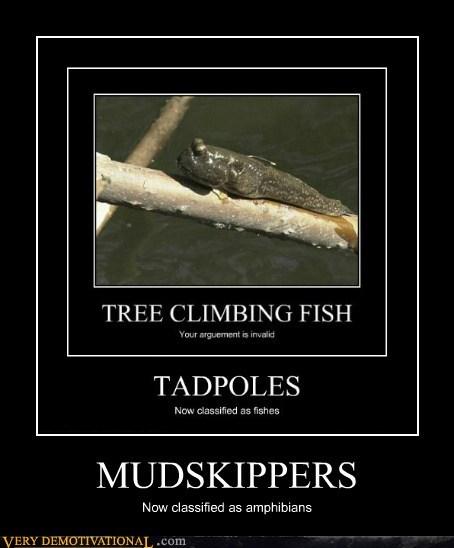 fish,hilarious,mudskippers,tadpole,wtf