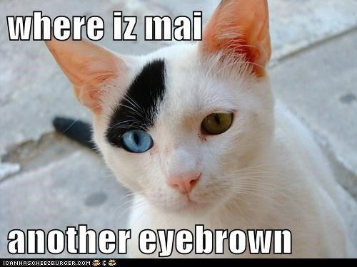 where iz mai  another eyebrown