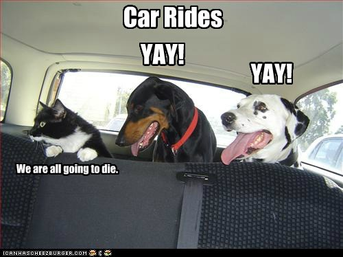 car,Cats,Death,die,dogs,drive,Hall of Fame,lolcats,opposites,ride,scared,scary,yay