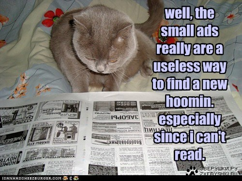 well, the small ads really are a useless way to find a new hoomin. especially since i can't read.