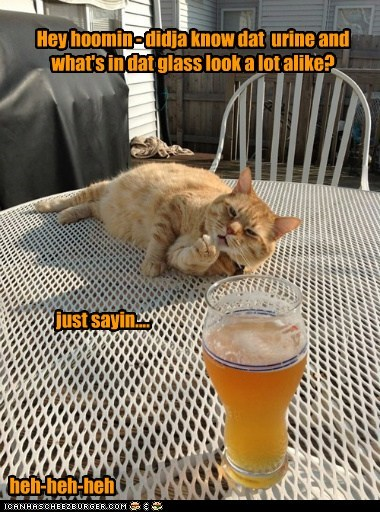 Hey hoomin - didja know dat  urine and what's in dat glass look a lot alike?