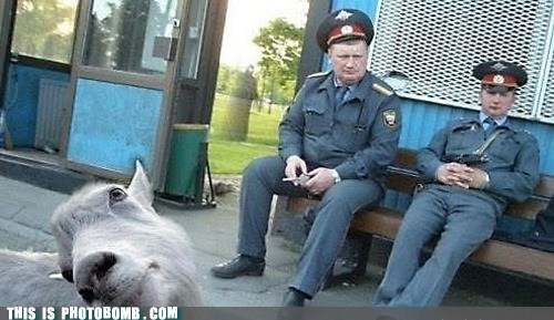 animal,Animal Bomb,foreign,goat,police,sucky part of town