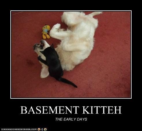 BASEMENT KITTEH