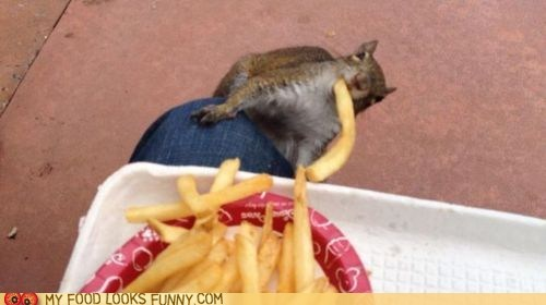 fries,snack,squirrel,steal,thief