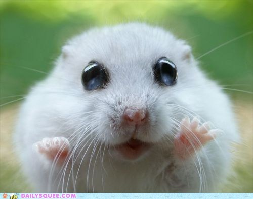 Daily Squee: I Can See Forever!