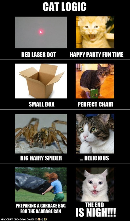 best of the week,cat,Cats,contradictory,illogical,logic,paradox,paradoxical,perception,reality
