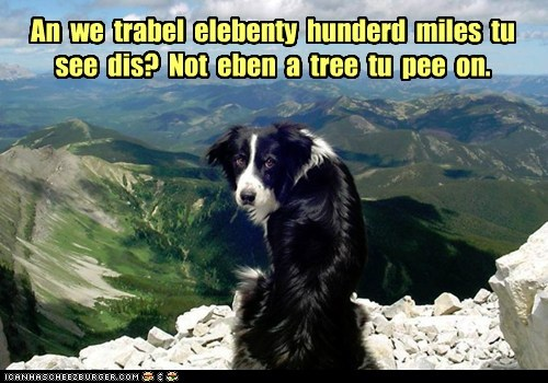 An  we  trabel  elebenty  hunderd  miles  tu  see  dis?  Not  eben  a  tree  tu  pee  on.