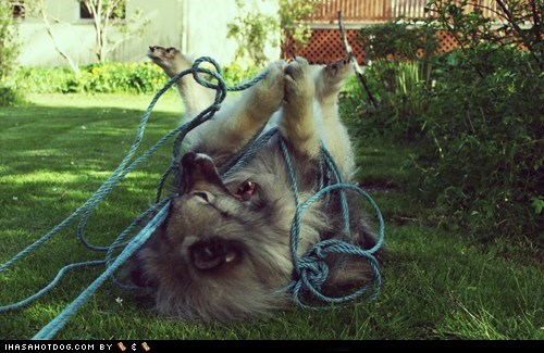 Goggie ob teh Week: Tiny Net is a Death Sentence!