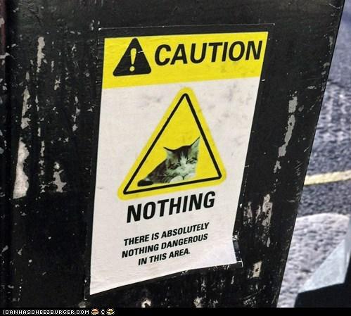 caution,dangerous,kitten,sign,signs,warning