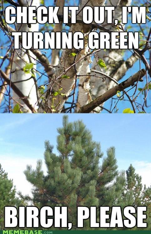 birch,deadwood,green,Memes,please