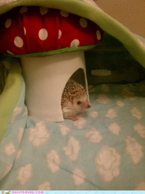 hedgehog,hedgehogs,mario,mushroom,Mushrooms,sonic,squee