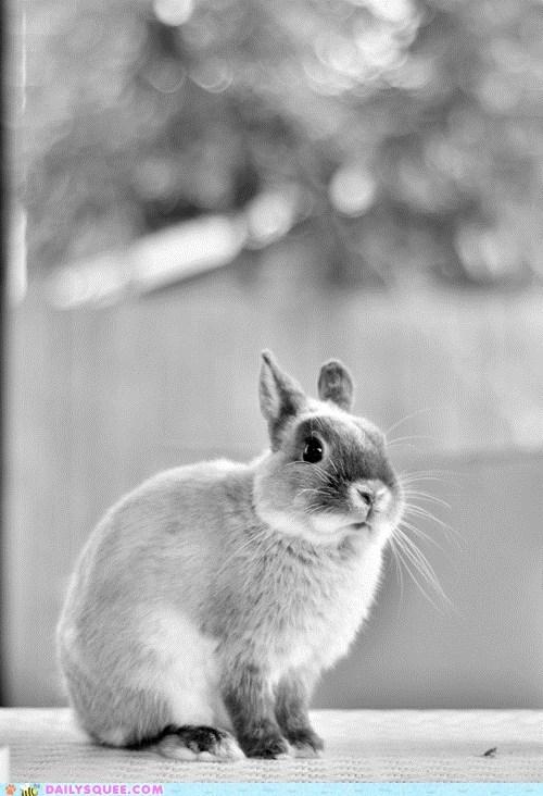 artsy,black and white,bunny