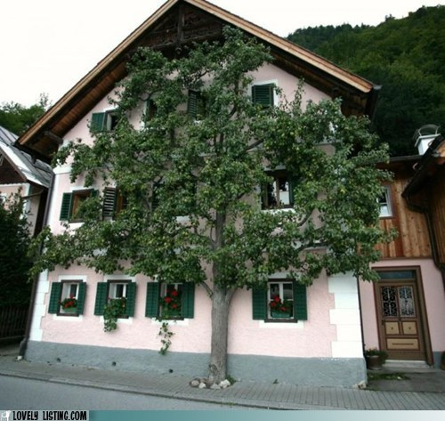 tree,vine,wall,windows