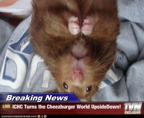 Breaking News - ICHC Turns the Cheezburger World UpsideDown!