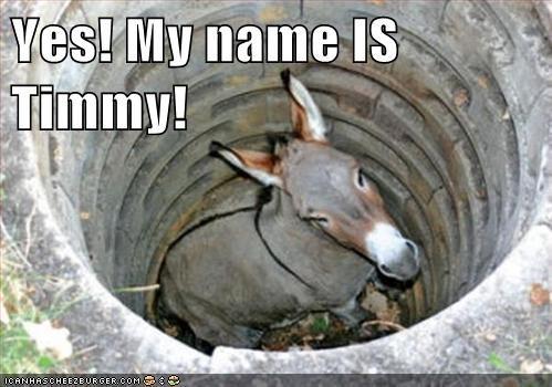 deep,donkey,farm,hole,lassie,reference,stuck,well