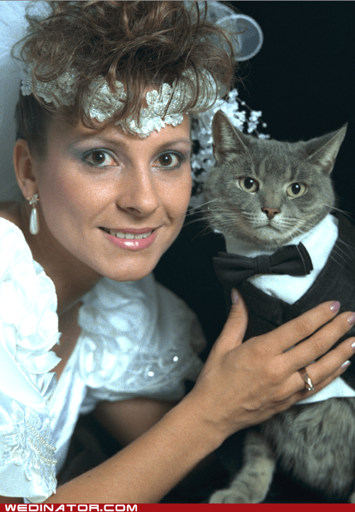 bride,Cats,funny wedding photos,Hall of Fame,lonely,Sad