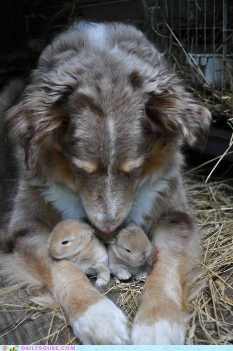 Babies,bunnies,dogs,hay,protect