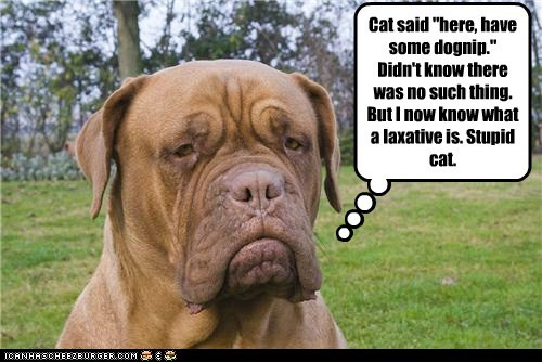 """Cat said """"here, have some dognip."""" Didn't know there was no such thing. But I now know what a laxative is. Stupid cat."""