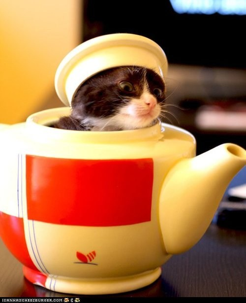 Cyoot Kitteh of teh Day: Iz a Widdle Teapot...
