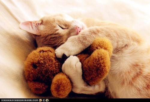 bears,Cats,cyoot kitteh of teh day,snuggles,stuffed animals,teddy,teddy bears