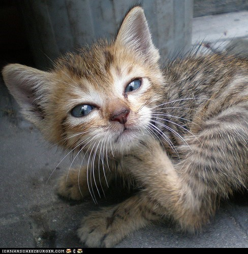 Cyoot Kitteh of teh Day: An Itch I Can Scratch