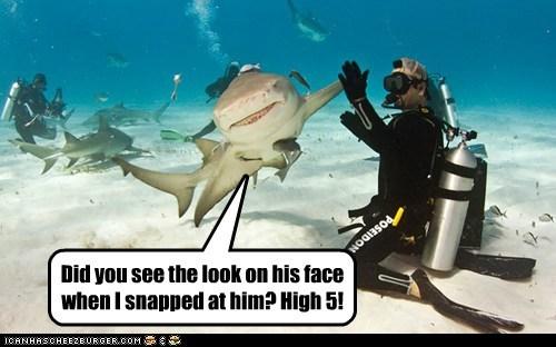bro,high five,ocean,shark,water