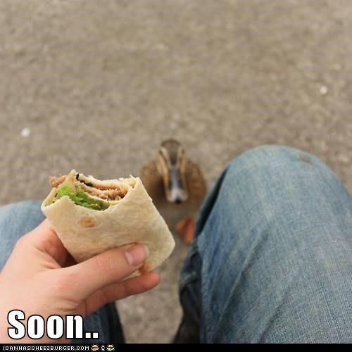 birds,duck,ducks,food,hungry,noms,SOON,take,thief