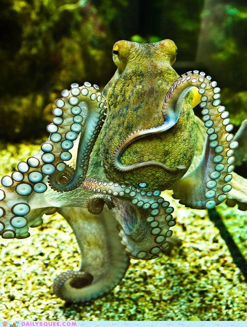 Squee Spree: Octopus Dance!