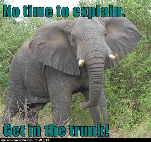 elephant,no time to explain,nose,trunk