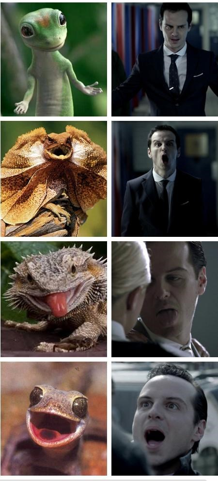 bbc,fandom,It Came From the Interwebz,lizards,look alikes,moriarty,reptiles,Sherlock