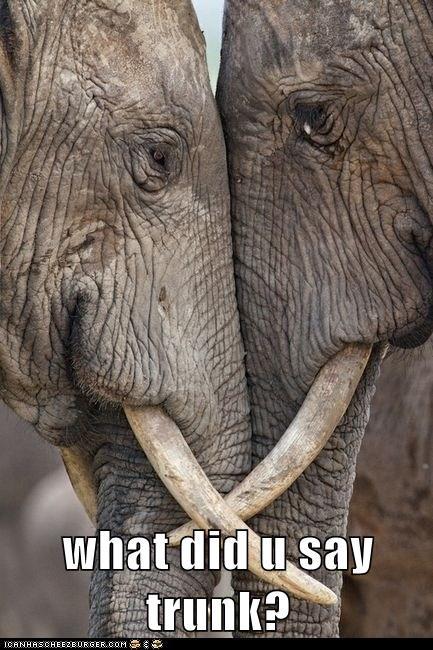 argue,bro,elephant,fight,mad,punk