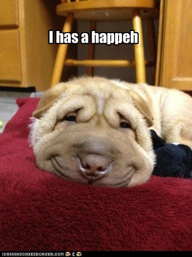 dogs,funny,shar pei
