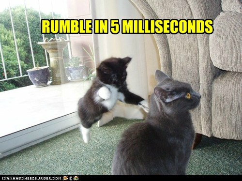 attack,attacking,bad idea,countdown,kitten,regret,rumble,unwise
